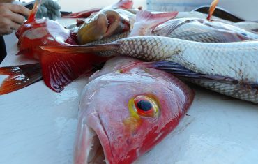 have your fish filleted and snap frozen
