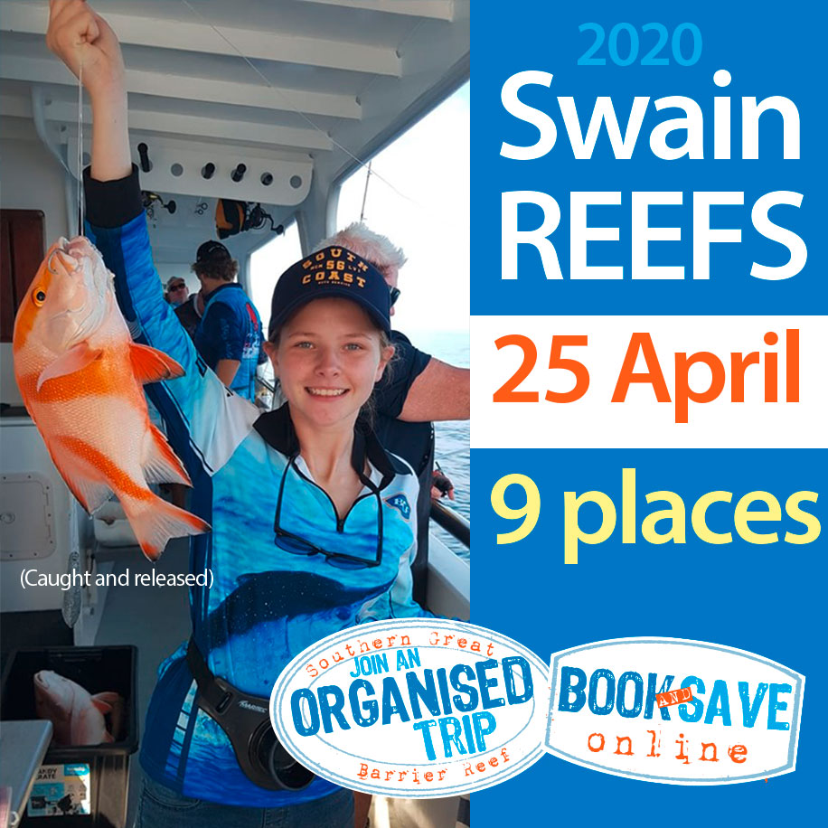Organised Trip to Swain Reefs in April